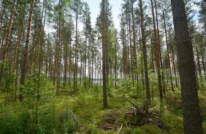Paloniemen metsiin perustetuilla koealoilla on testattu noin kahdenkymmenen vaihtoehtoisen metsänkasvatusmenetelmän tehokkuutta. Havaintojen perusteella sekametsä on tuottoisa myös moteissa mitattuna.