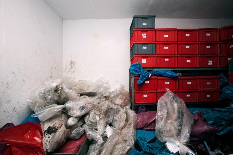 Instituutissa eläimiä säilytetään pakastehuoneessa. Tutkittavaksi tuodaan myös muita lajeja kuten harmaahylkeitä.