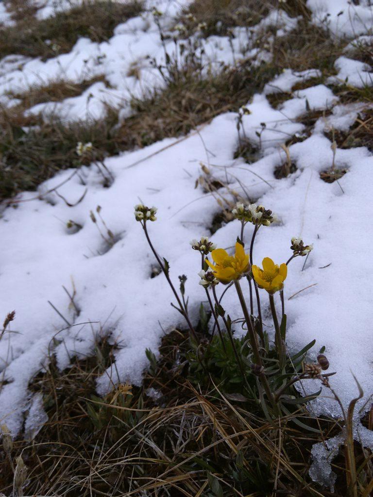 Pohjoiset kasvit eivät pienestä hätkähdä.