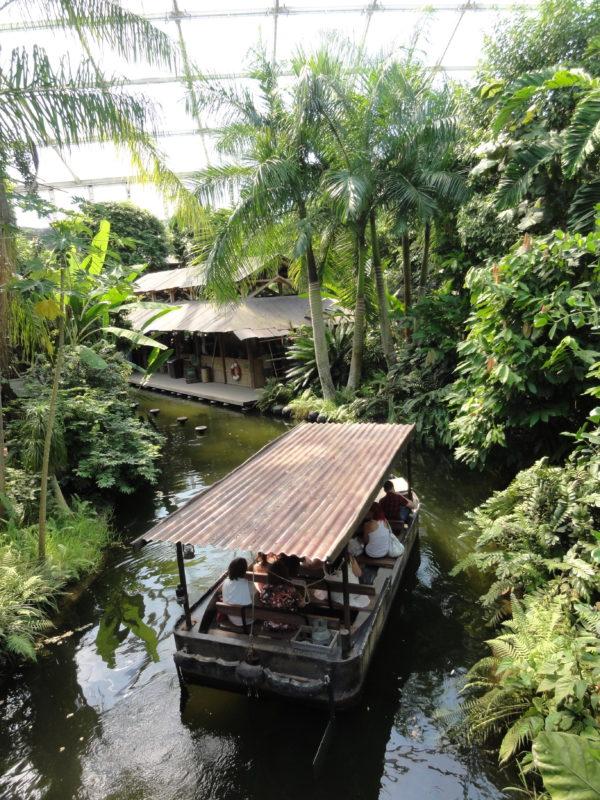 8. Viidakkojoki