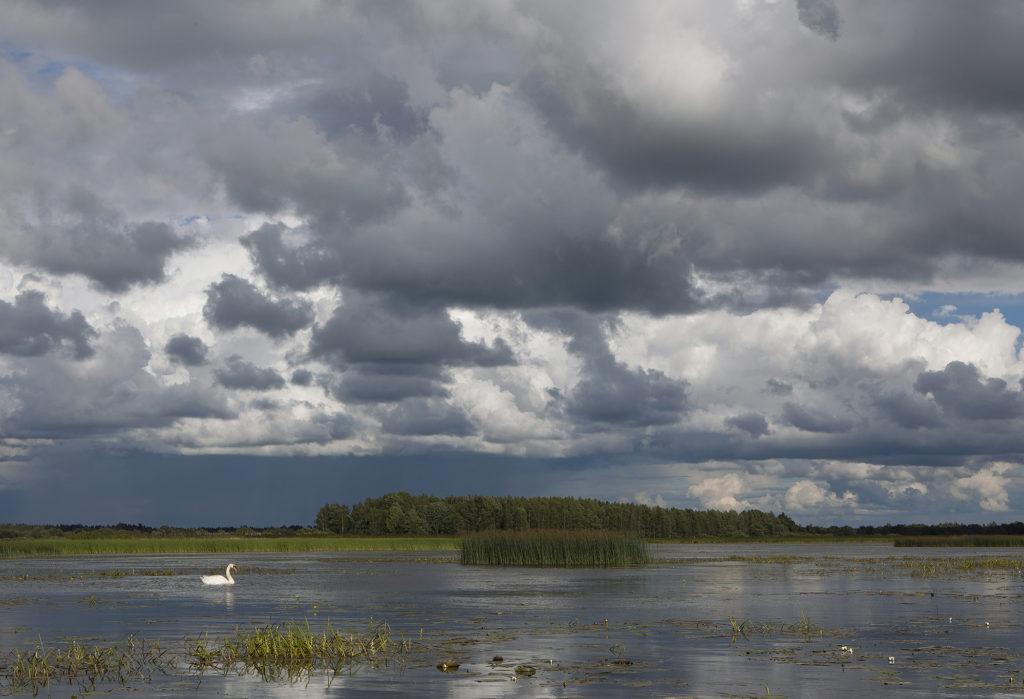 Kokemäenjoen suisto on arvokas lintuparatiisi. Joen kuljettama aines ruokkii sen elämää.